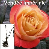 vendee_imperiale-buisson