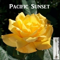 pacific-sunset